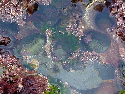 Photo Big Tide Pools 4 Ocean