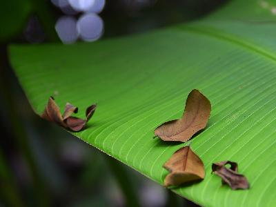 Photo Big Banana Leaf Plant