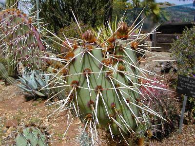 Photo Big Cactus 2 Plant