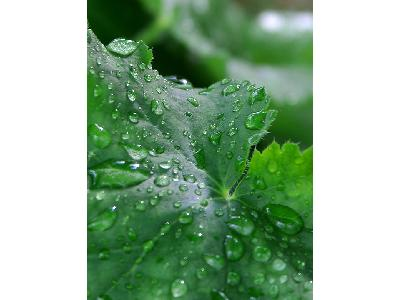 Photo Big Water Droplets Plant