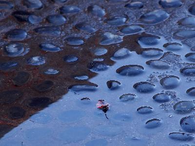Photo Big Rain Puddle Other