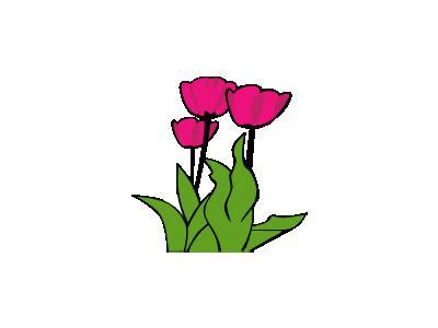 Tulips Ganson Plants