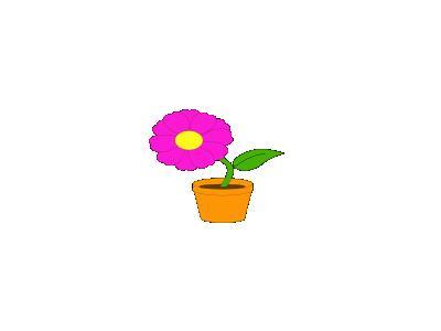 Flowerandpot Daniel Ste R Plants