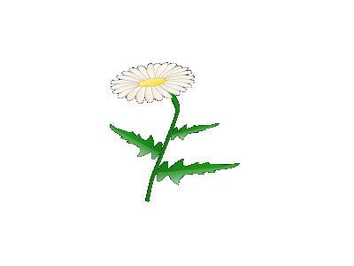 Daisy Jonathan Dietrich 01 Plants