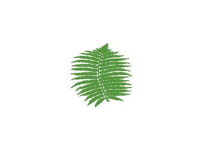 Fern Mo 01 Plants