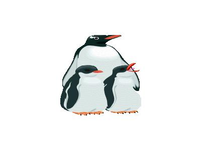 Pinguino3 Other