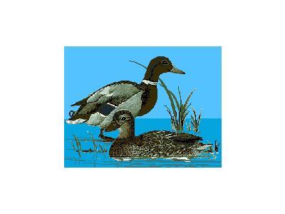 Logo Animals Ducks 021 Animated