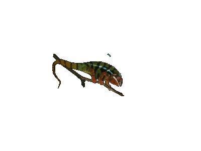 Logo Animals Reptiles 010 Animated