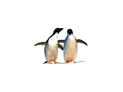 Logo Animals Penguins 002 Animated